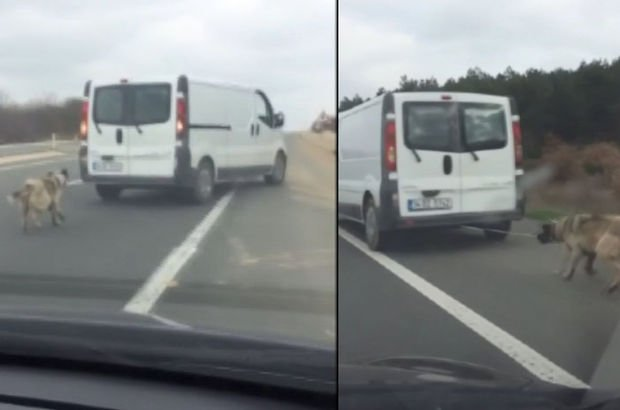 Köpeği araca iple bağlayıp sürükleyen minibüs sürücüsünün ifadesi ortaya çıktı