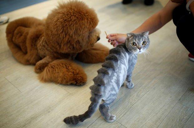 Sahipli kedi ve köpeklere 15 karakterli çip zorunlu getirildi