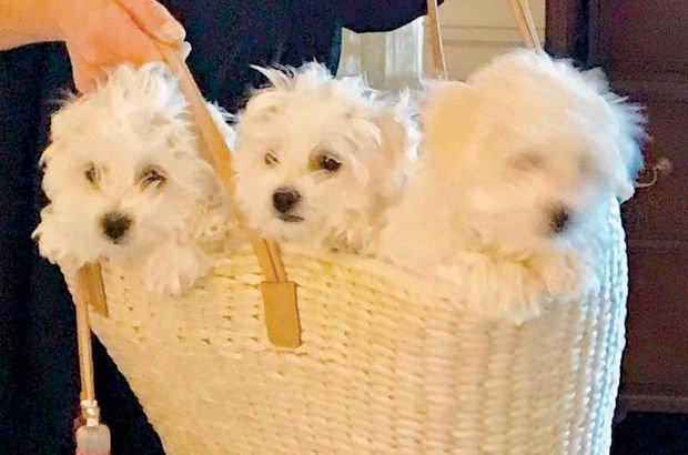Barbra Streisand, 200 bin dolar verip köpeğini klonlattı!