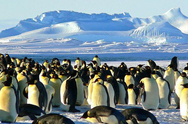 Antarktika'da heyecanlandıran keşif: 1.5 milyonluk koloni bulundu