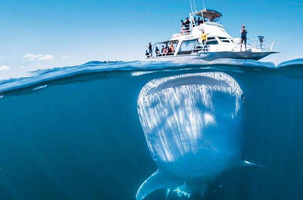 dev balina