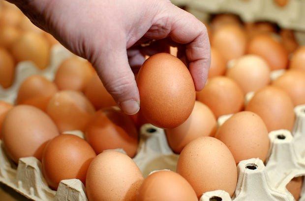 yumurta üretimi