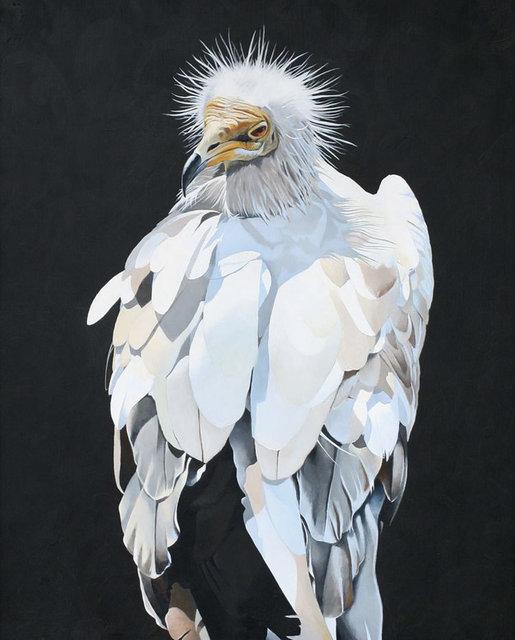 Matt Adrian'ın pastel renklerdeki kuş resimleri büyülüyor
