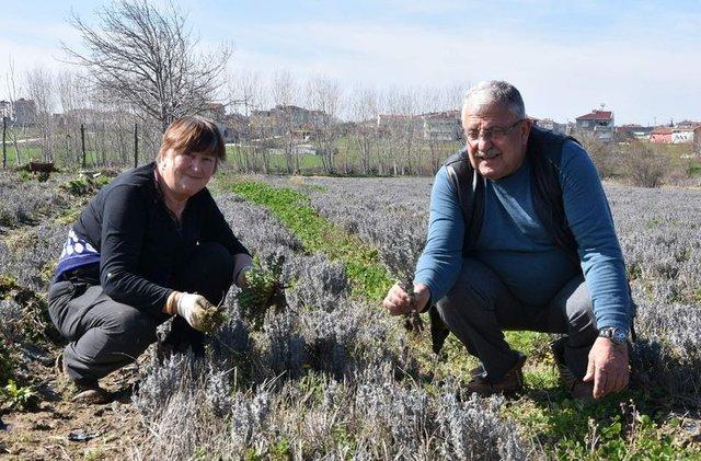 Bulgaristan'dan gelip, lavanta üretimine başladılar