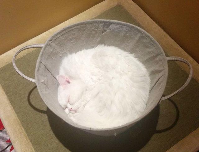Kedilerin aslında 'sıvı' olduğunu kanıtlayan 42 fotoğraf!