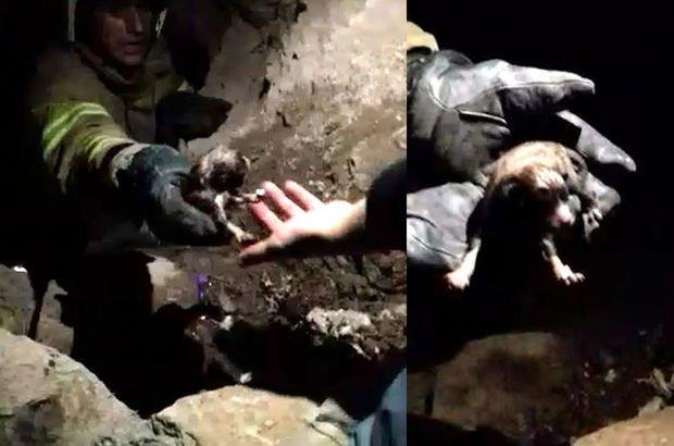 Balıkesir'de kuyuda doğuran köpek ve 8 yavrusunu itfaiye ekibi çıkardı
