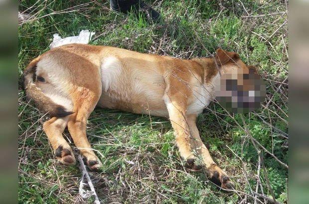 Vicdansızlar! 18 köpeğin ölüm şekli belli oldu