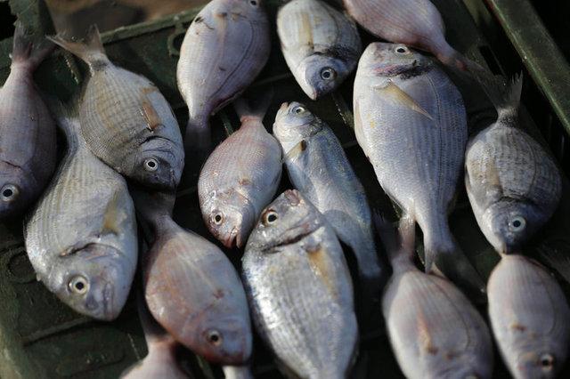 Uzmanlardan 'haftada en az iki kez balık tüketin' uyarısı!