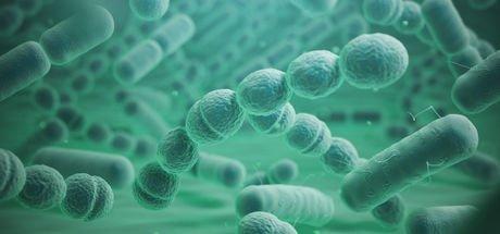 Et yiyen bakteri alarmı! Görülmemiş bir hızla yayılıyor...