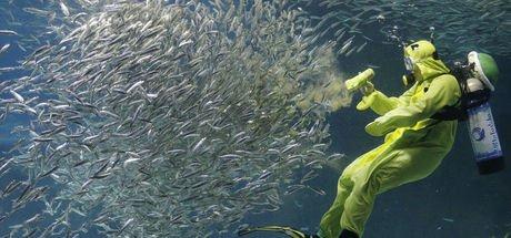 Cava Denizi'nde 12 deniz canlısı keşfedildi