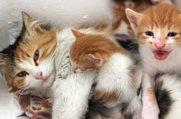 Kedinin merhameti yavrunun hayatını kurtardı!