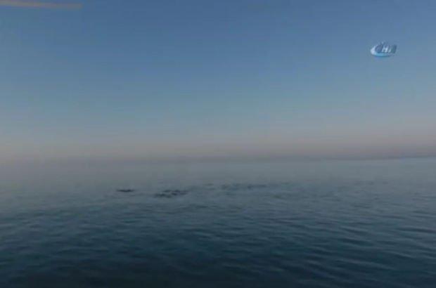 Yunusları görüntüleyen fotoğrafçı korkunç manzarayla karşılaştı!
