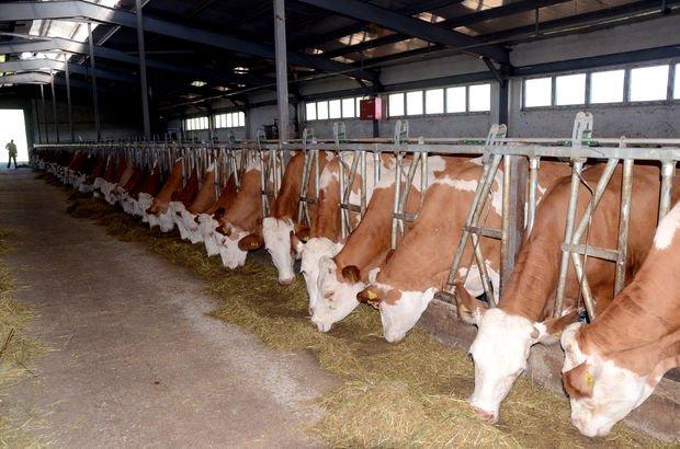 Ukrayna, sığır eti