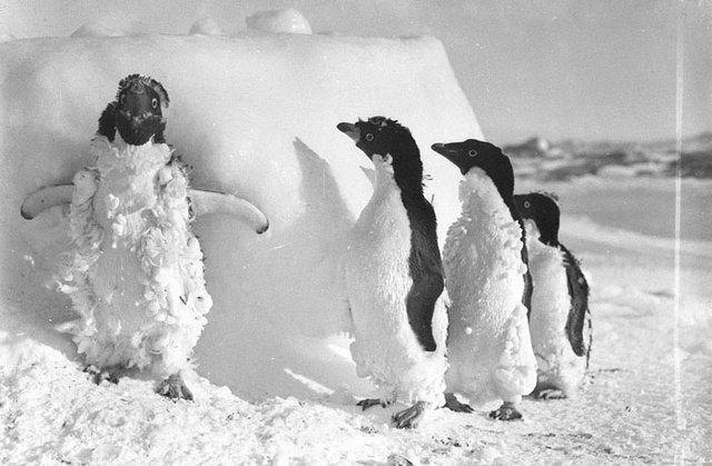 Antarktika Seferi'nin görülmemiş fotoğrafları tüylerinizi diken diken edecek
