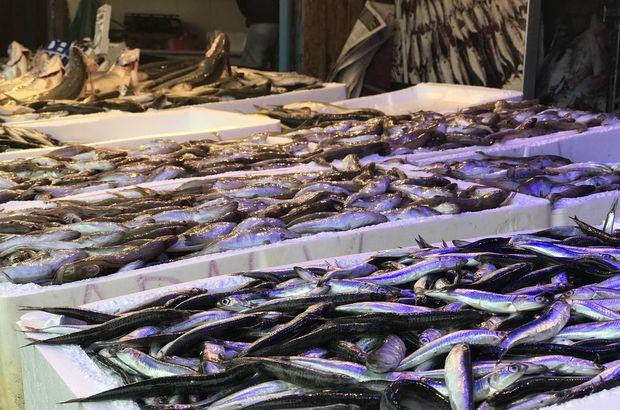 mezgit, balık