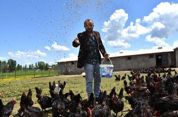 Terörden kaçtığı köyüne dönerek tavuk çiftliği kurdu