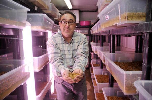 460 kafeste, 9 farklı çeşit böcek ile Böcek Çiftliği