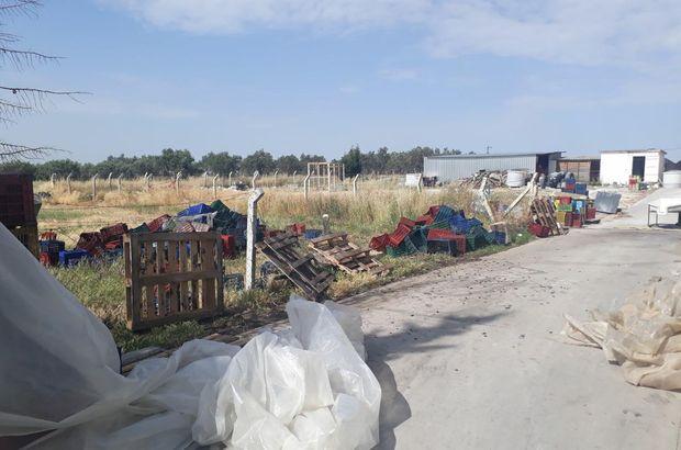 7 ton zeytin çaldılar! 5 kişi tutuklandı
