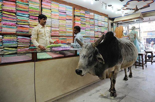 Hindistan'da inek kestiği iddia edilen Müslüman linç edildi