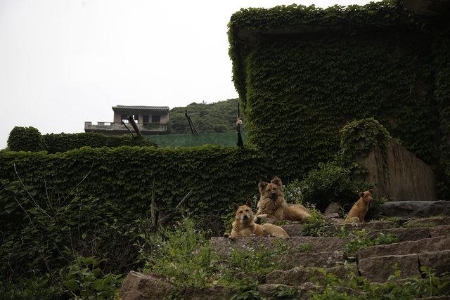 """Çin'deki """"hayalet köy"""" hem ürkütüyor, hem büyülüyor"""