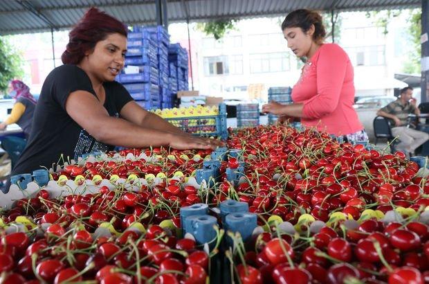 Kiraz fiyatının düşmesine üreticilerden tepki