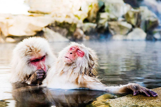 Günün favorisi: 2018'in birbirinden komik vahşi yaşam fotoğrafları