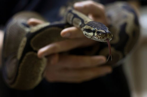 yılan