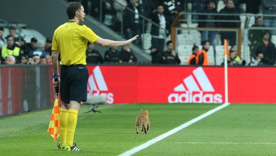 Kedi cezası alay konusu oldu