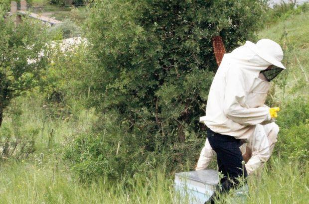 Başarılı terör operasyonları sonucu Şırnaklı arıcılar Kato dağına çıkmaya başladı