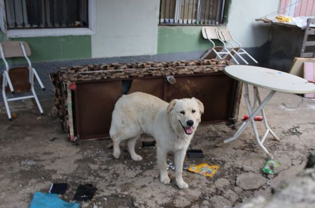Evi kiralamış, köpeğe de sahip çıkmıştı