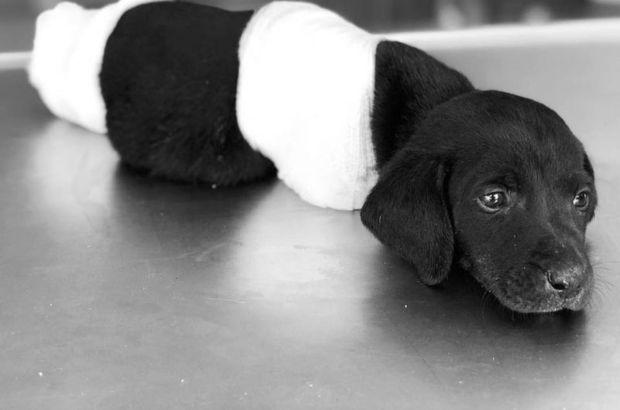Sakaryada bu kez de 5 yavru köpek ölü bulundu