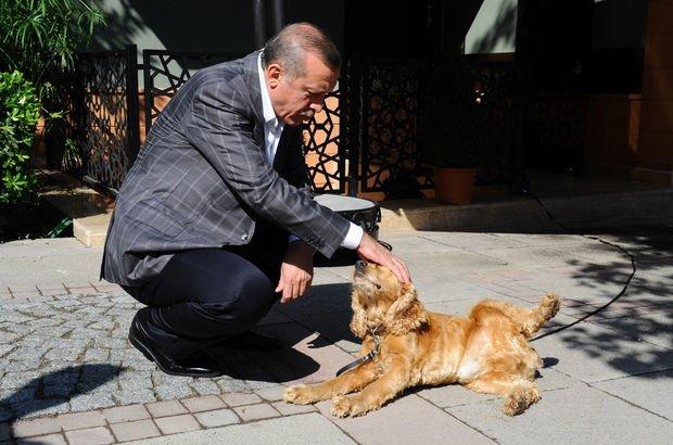 """Erdoğan Twitter'dan paylaştı! """"Kısıklı'da köpeğimiz Çiko ile..."""""""