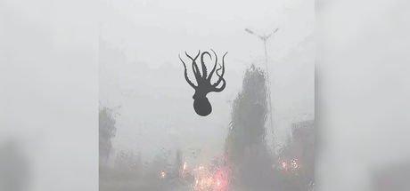 Çin'de gökten ahtapot yağdı