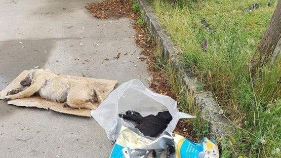 Sakarya'da 4'ü yavru 5 köpek zehirlenerek öldürüldü!