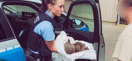 Polise 'sarhoş kirpi' ihbarı