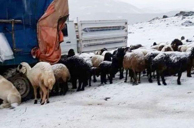 Çobanlar neye uğradığını şaşırdı