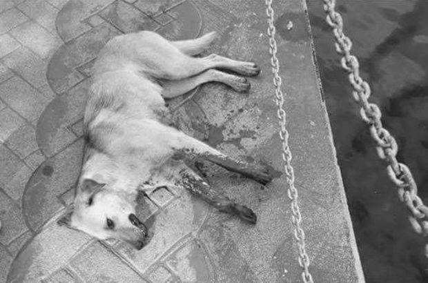 Tavuklarına saldıran köpeği öldürdü