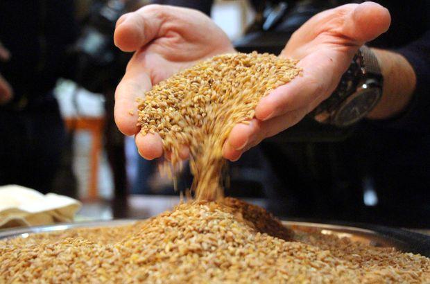 10 bin yıllık buğday geliyor