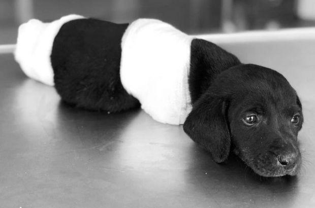 Sakarya'daki yavru köpek vahşetinde yeni iddia
