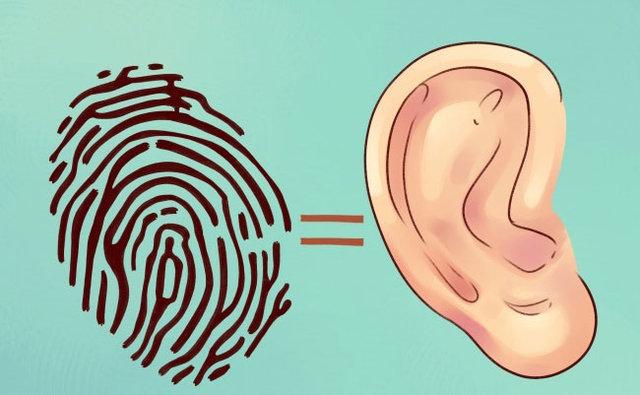 Kulaktaki hangi bölge ne işe yarıyor? - Sağlık Haberleri