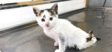 Erzincan'da arka ayakları tutmayan yavru kediye ikinci hayat
