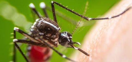 Sivrisinek en çok kimleri ısırıyor?