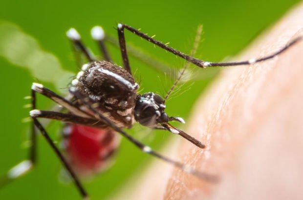 Sivrisineğin en çok ısırdığı kan grupları!