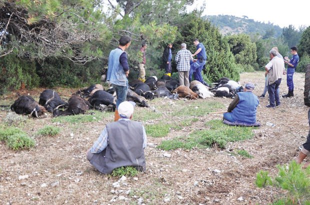 Yıldırım düştü, 106 keçi öldü