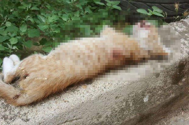 Yavru Kedi Vahşice öldürüldü Son Haberler