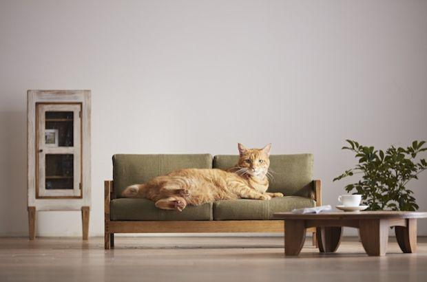 Japon marka kedileri memnun etmek için ilginç bir tasarıma imza attı