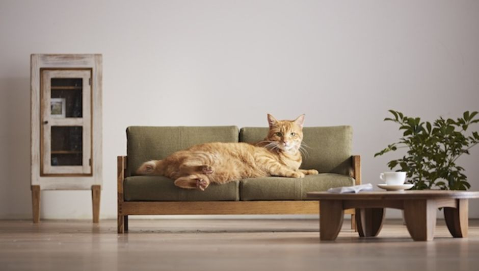 Japonlardan şaşırtan tasarım! Kedileri memnun etmek için...