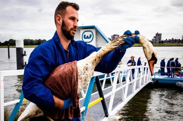 Hollanda'da çevre felaketi: Yüzlerce kuş yakalanarak temizleniyor