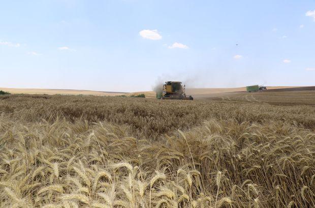 Umduğunu bulamayan çiftçilerin umudu buğday