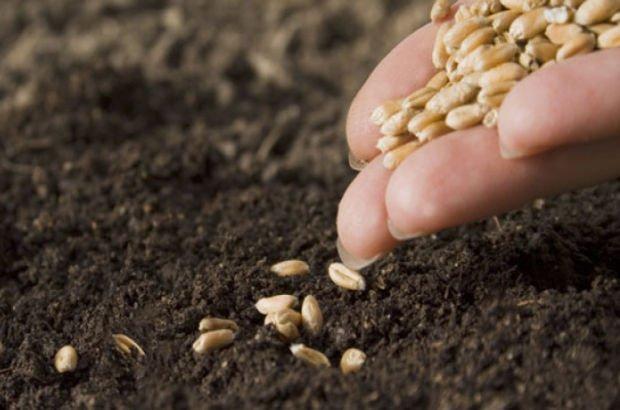 Bayraktar: Tohum ve fidan desteğinde son üç gün